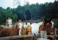 HORSEBACK RIDING IN THE ADIRONDACK MOUNTAINS